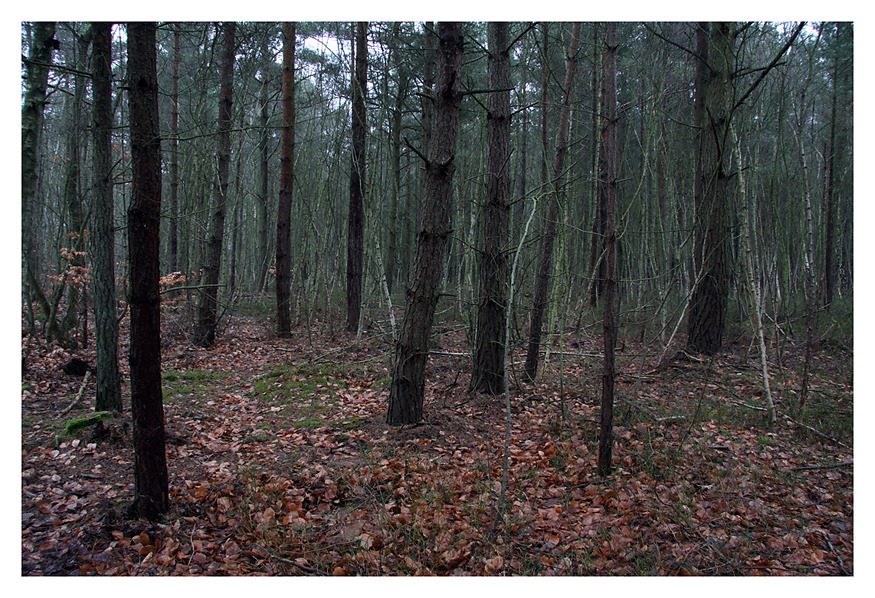 Baltic Sea,  Forest #3, 2009